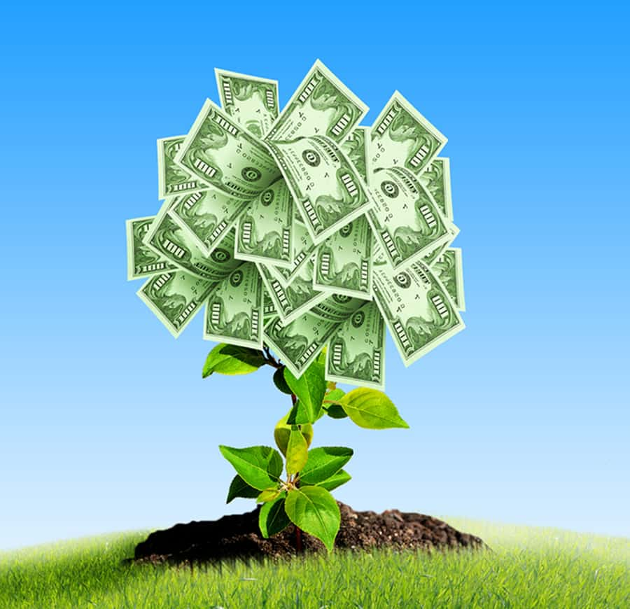 success-tree-of-dollar-bills-on-the-gr-15581420